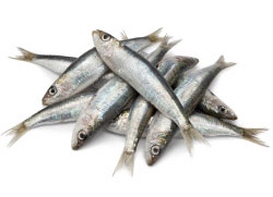 Top 5 Mediterranean Foods-sardines